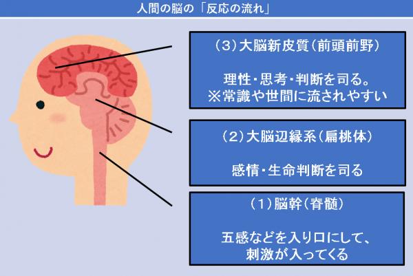 人間の脳の「反応の流れ」